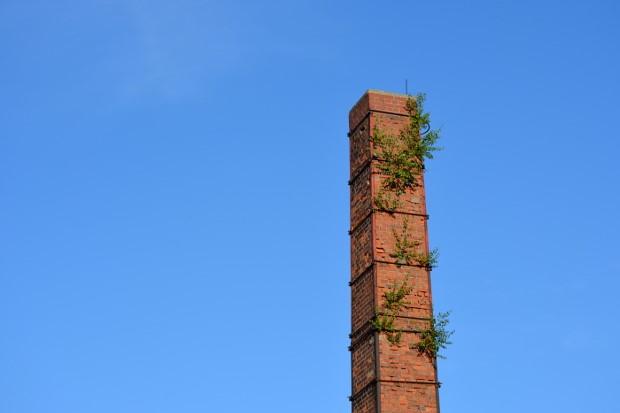 دودکش با گیاهانی که از آن خارج می شوند
